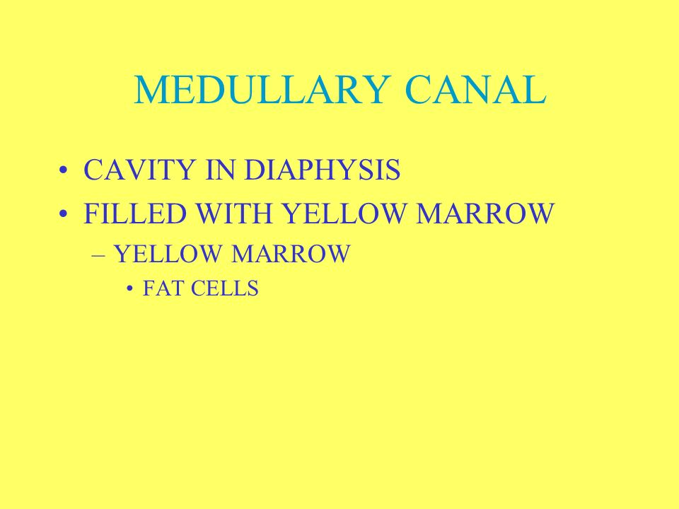 MEDULLARY CANAL CAVITY IN DIAPHYSIS FILLED WITH YELLOW MARROW