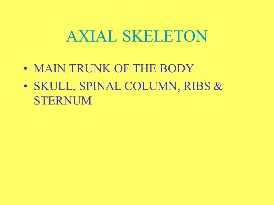 AXIAL SKELETON MAIN TRUNK OF THE BODY