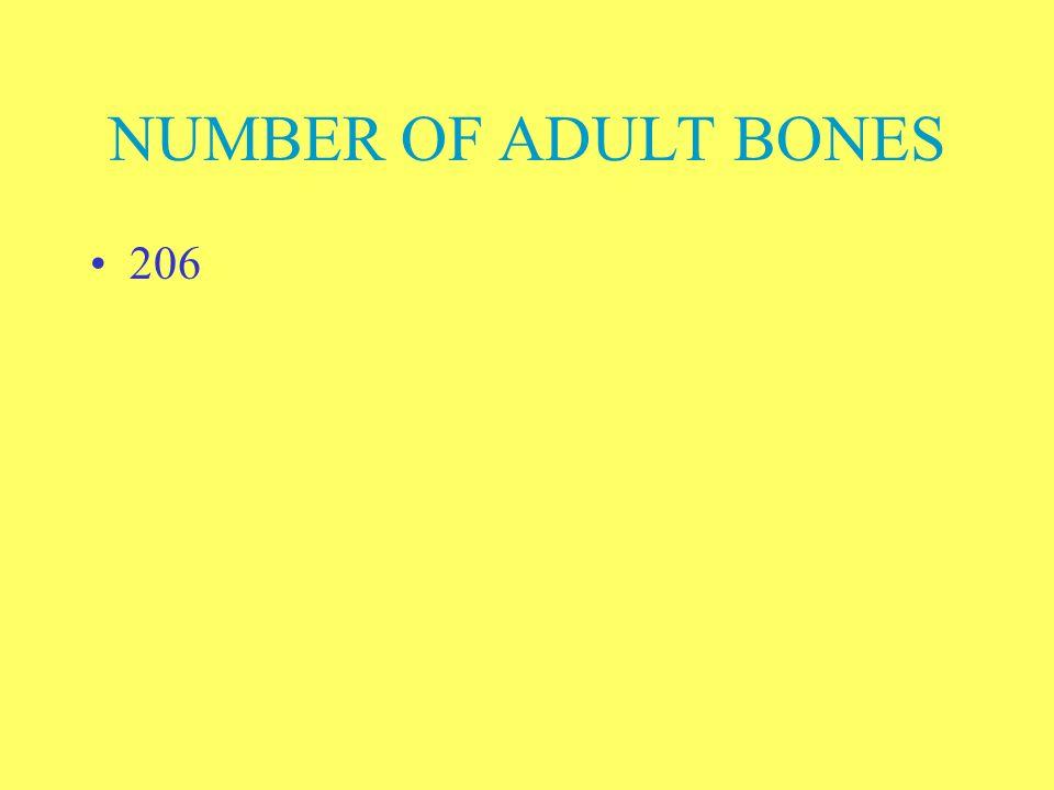 NUMBER OF ADULT BONES 206