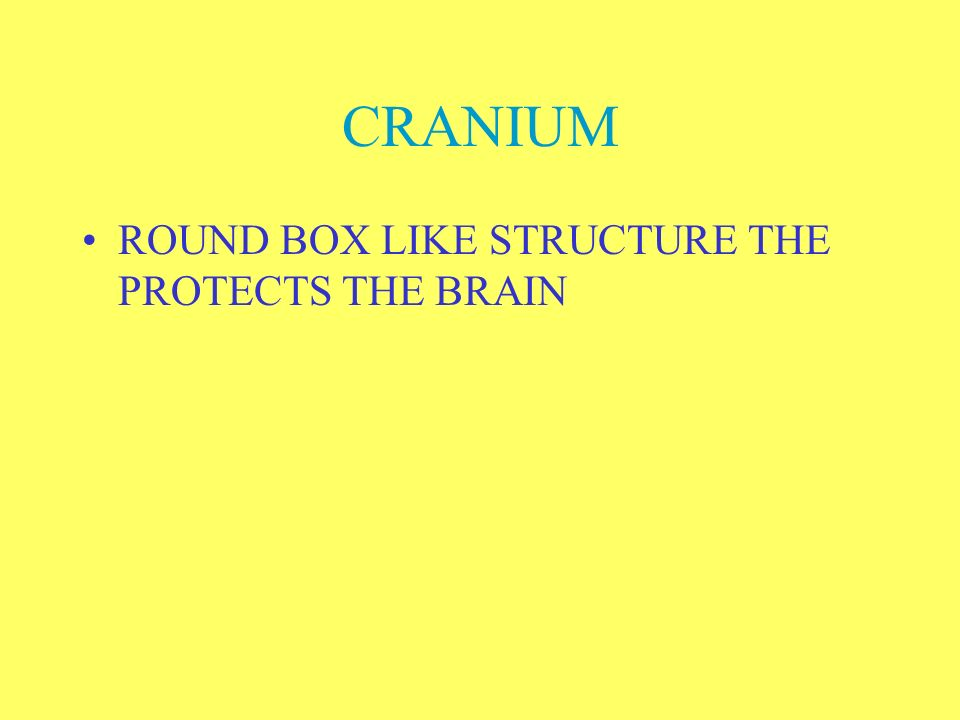 CRANIUM ROUND BOX LIKE STRUCTURE THE PROTECTS THE BRAIN