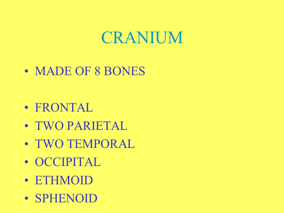 CRANIUM MADE OF 8 BONES FRONTAL TWO PARIETAL TWO TEMPORAL OCCIPITAL
