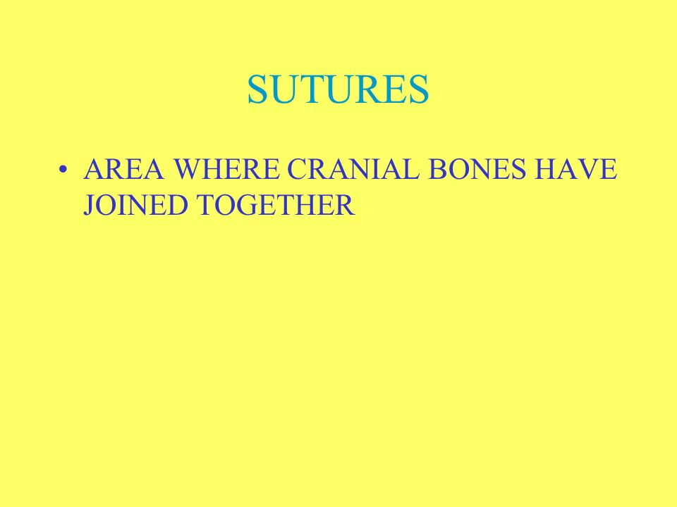 SUTURES AREA WHERE CRANIAL BONES HAVE JOINED TOGETHER