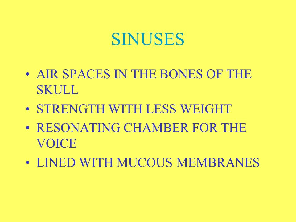 SINUSES AIR SPACES IN THE BONES OF THE SKULL STRENGTH WITH LESS WEIGHT