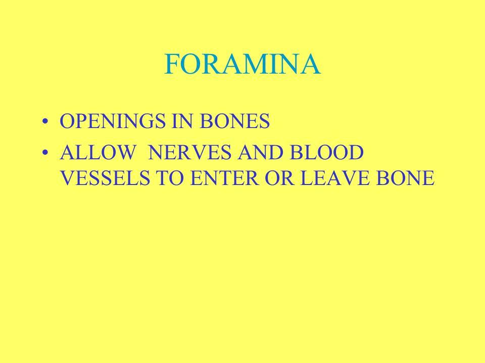 FORAMINA OPENINGS IN BONES