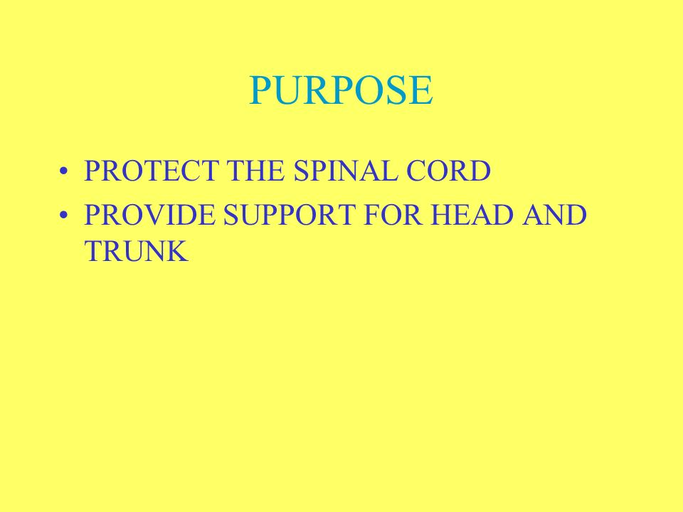 PURPOSE PROTECT THE SPINAL CORD PROVIDE SUPPORT FOR HEAD AND TRUNK