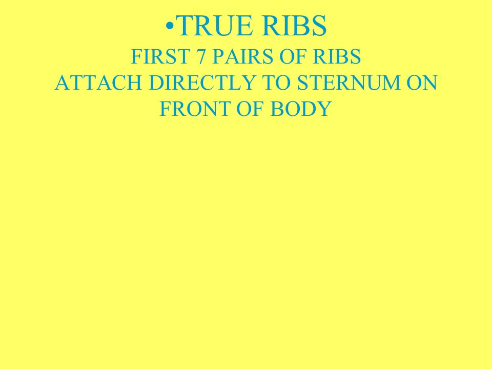 TRUE RIBS FIRST 7 PAIRS OF RIBS ATTACH DIRECTLY TO STERNUM ON FRONT OF BODY