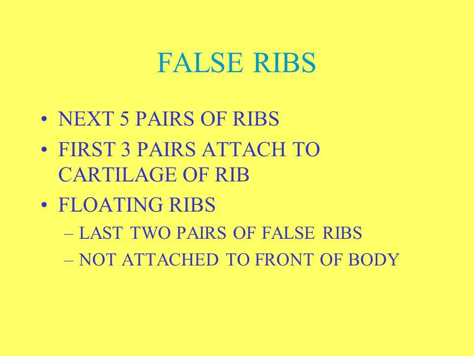 FALSE RIBS NEXT 5 PAIRS OF RIBS