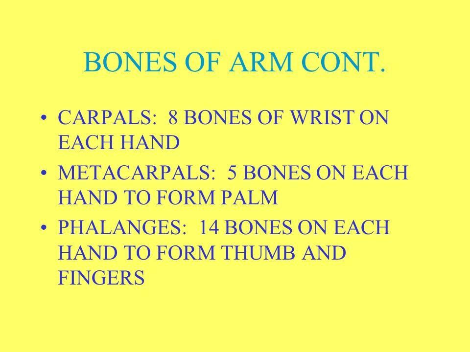 BONES OF ARM CONT. CARPALS: 8 BONES OF WRIST ON EACH HAND
