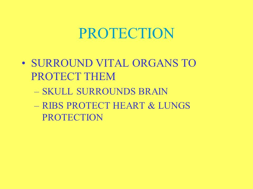 PROTECTION SURROUND VITAL ORGANS TO PROTECT THEM SKULL SURROUNDS BRAIN