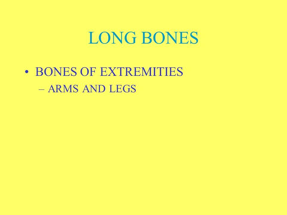 LONG BONES BONES OF EXTREMITIES ARMS AND LEGS