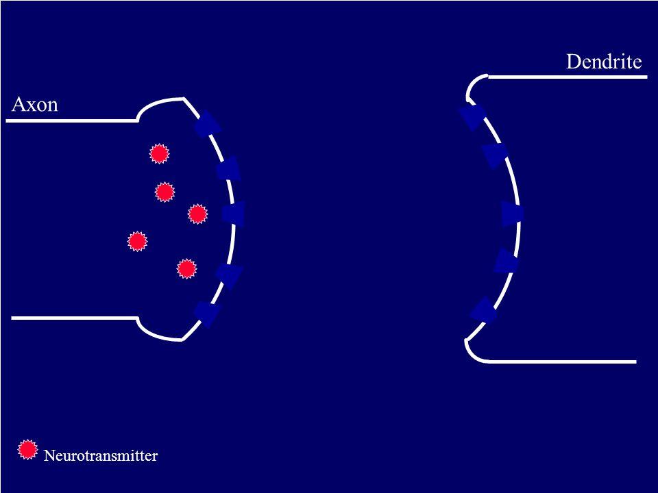 Dendrite Axon Neurotransmitter