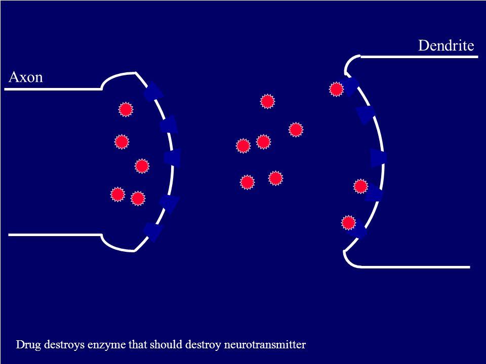 Dendrite Axon Drug destroys enzyme that should destroy neurotransmitter