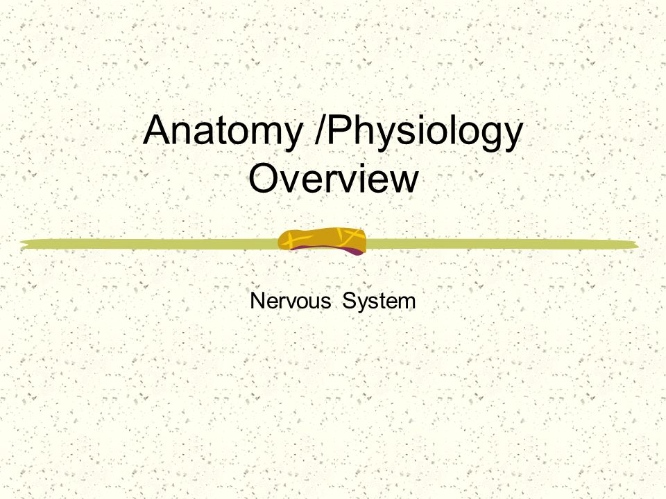 Anatomy /Physiology Overview