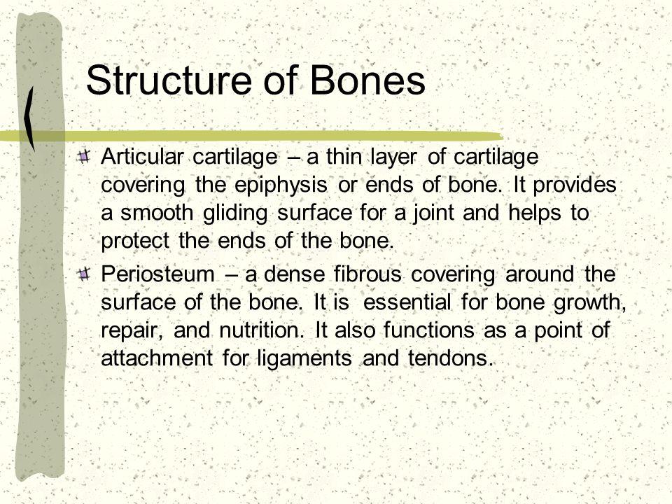 Structure of Bones