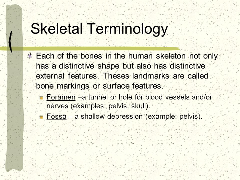 Skeletal Terminology