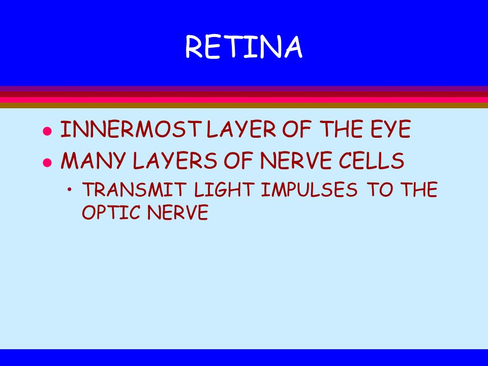 RETINA INNERMOST LAYER OF THE EYE MANY LAYERS OF NERVE CELLS