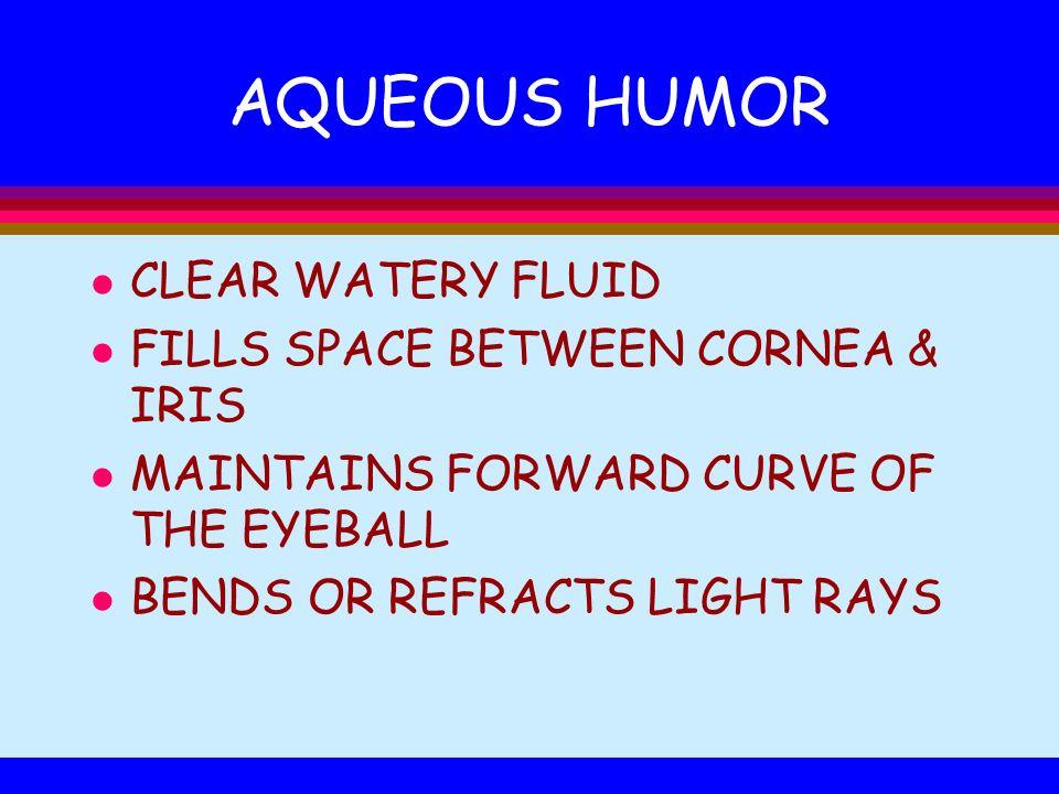 AQUEOUS HUMOR CLEAR WATERY FLUID FILLS SPACE BETWEEN CORNEA & IRIS