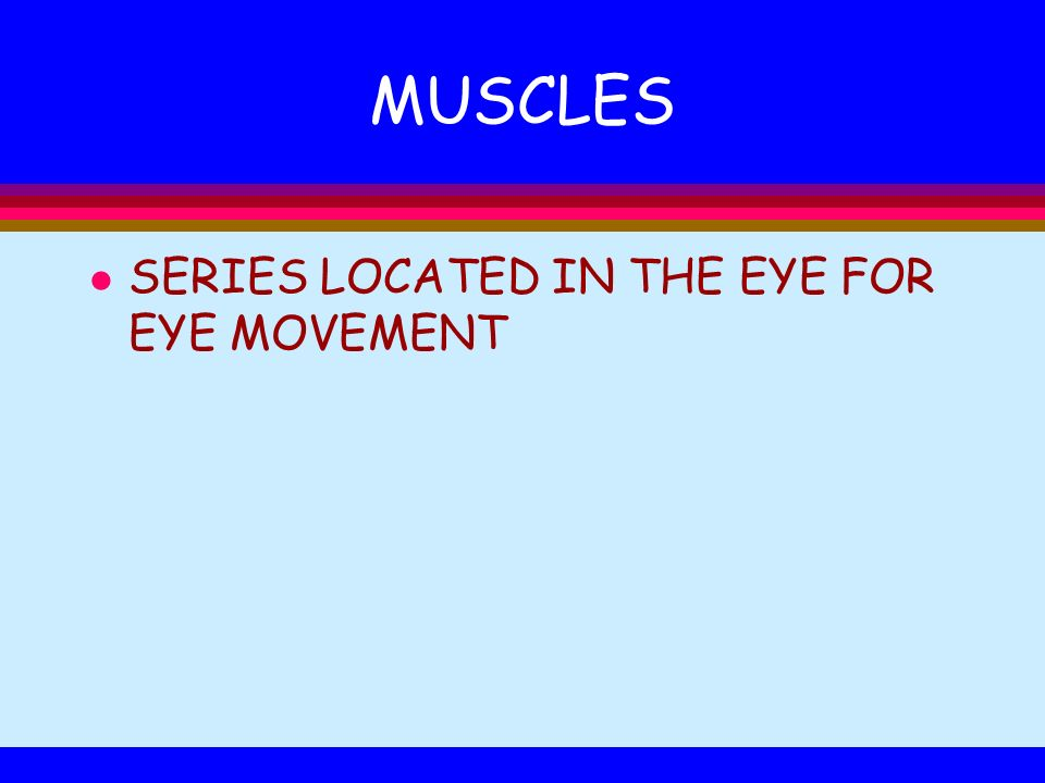 MUSCLES SERIES LOCATED IN THE EYE FOR EYE MOVEMENT