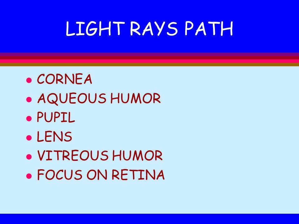 LIGHT RAYS PATH CORNEA AQUEOUS HUMOR PUPIL LENS VITREOUS HUMOR