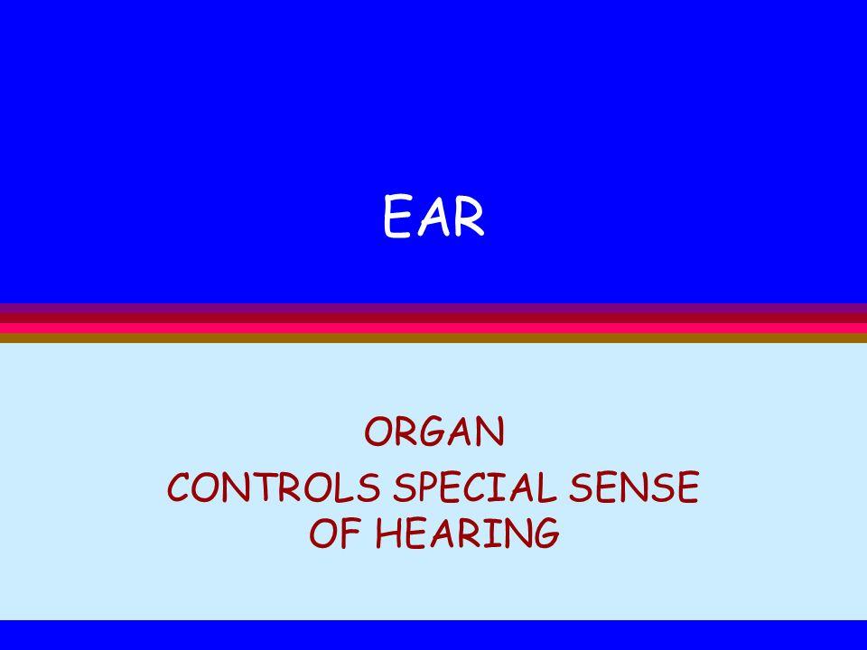 ORGAN CONTROLS SPECIAL SENSE OF HEARING