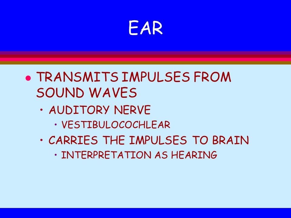 EAR TRANSMITS IMPULSES FROM SOUND WAVES AUDITORY NERVE