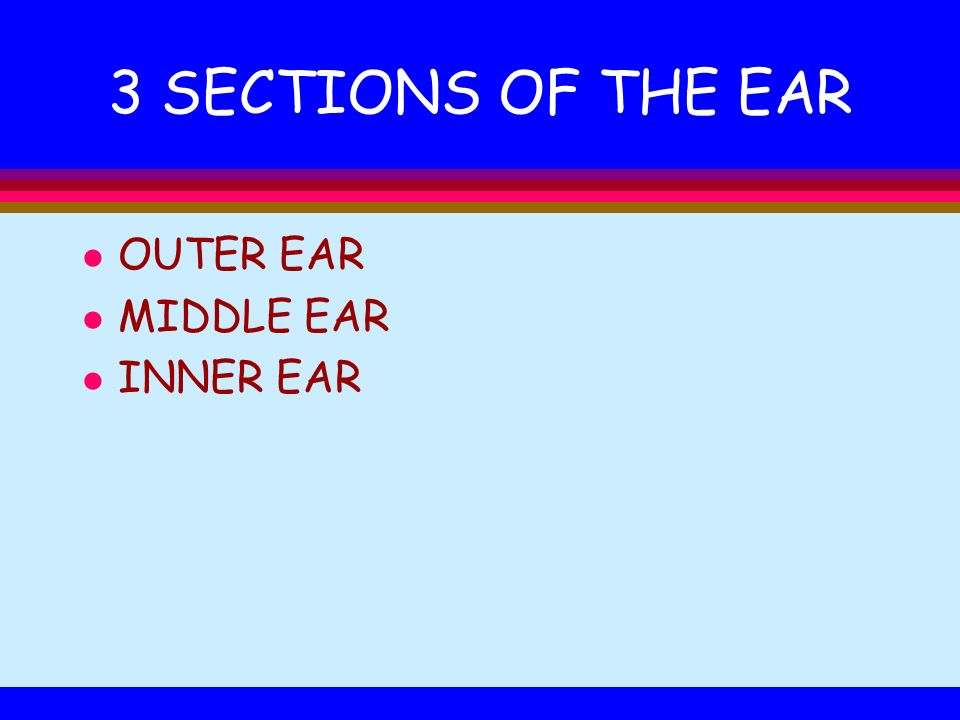 3 SECTIONS OF THE EAR OUTER EAR MIDDLE EAR INNER EAR