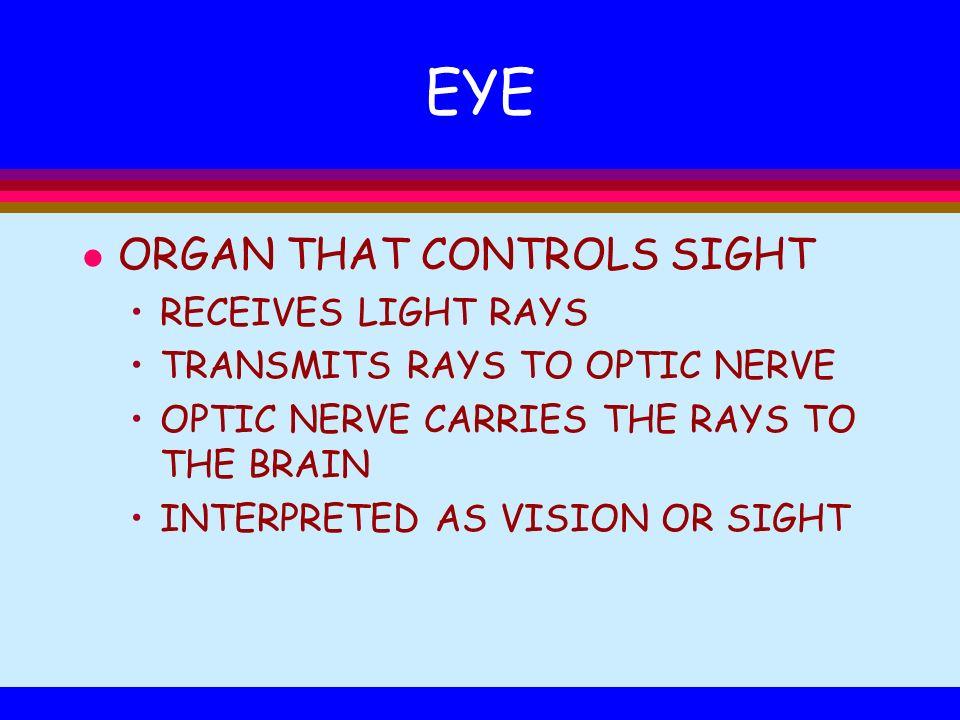 EYE ORGAN THAT CONTROLS SIGHT RECEIVES LIGHT RAYS