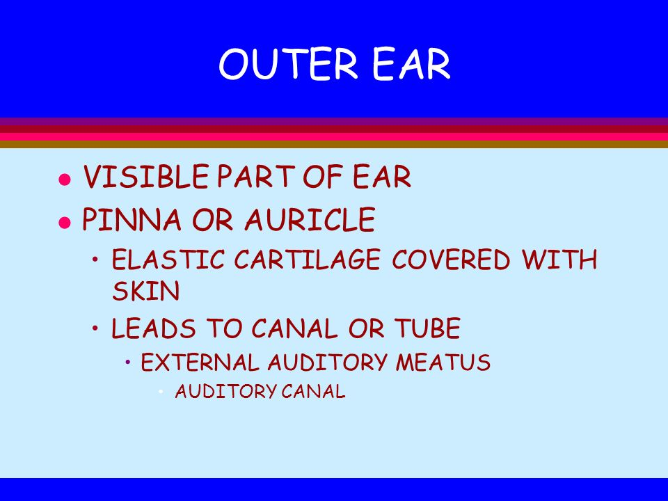 OUTER EAR VISIBLE PART OF EAR PINNA OR AURICLE