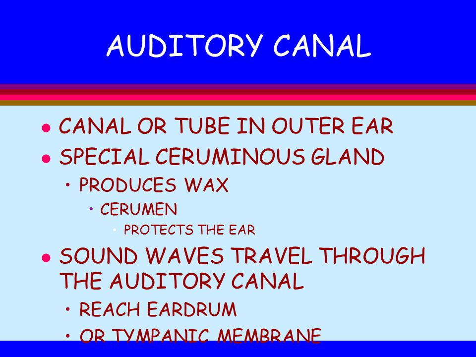 AUDITORY CANAL CANAL OR TUBE IN OUTER EAR SPECIAL CERUMINOUS GLAND
