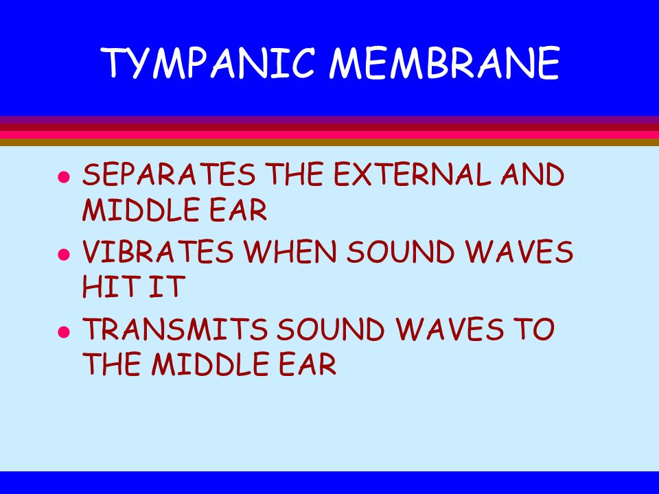 TYMPANIC MEMBRANE SEPARATES THE EXTERNAL AND MIDDLE EAR