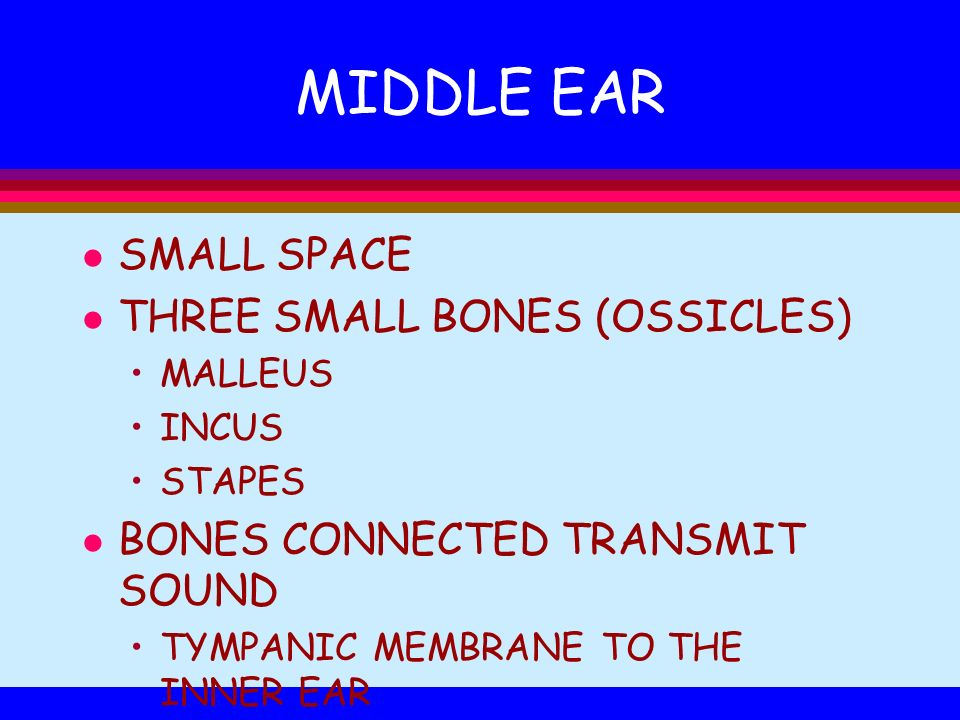 MIDDLE EAR SMALL SPACE THREE SMALL BONES (OSSICLES)