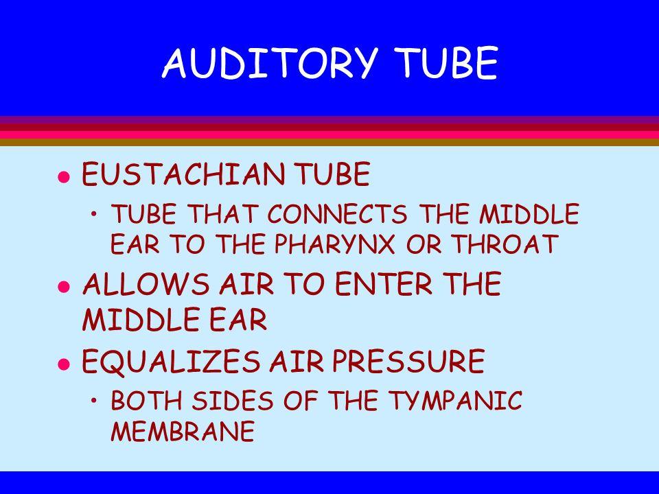 AUDITORY TUBE EUSTACHIAN TUBE ALLOWS AIR TO ENTER THE MIDDLE EAR