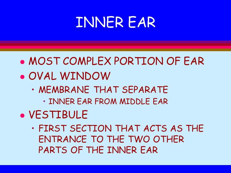 INNER EAR MOST COMPLEX PORTION OF EAR OVAL WINDOW VESTIBULE
