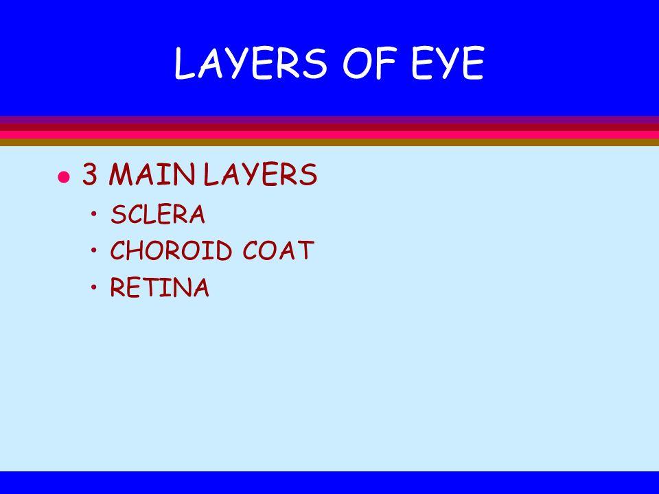 LAYERS OF EYE 3 MAIN LAYERS SCLERA CHOROID COAT RETINA