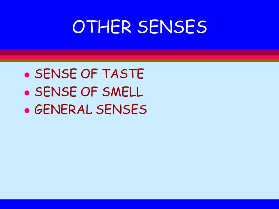 OTHER SENSES SENSE OF TASTE SENSE OF SMELL GENERAL SENSES