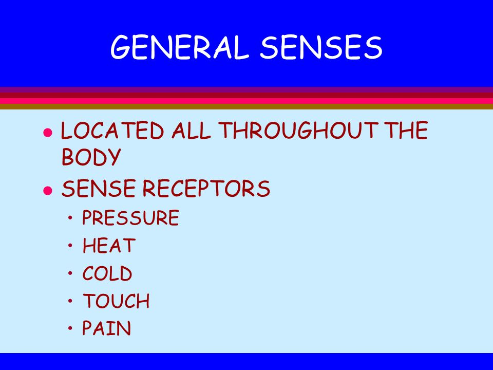 GENERAL SENSES LOCATED ALL THROUGHOUT THE BODY SENSE RECEPTORS