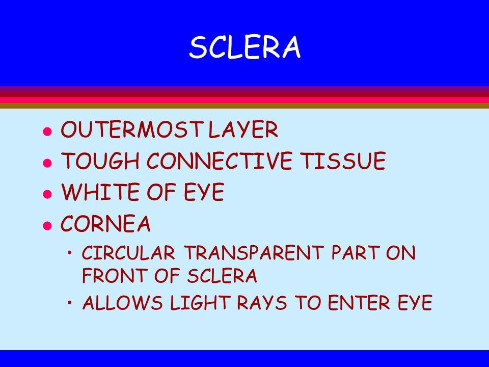 SCLERA OUTERMOST LAYER TOUGH CONNECTIVE TISSUE WHITE OF EYE CORNEA