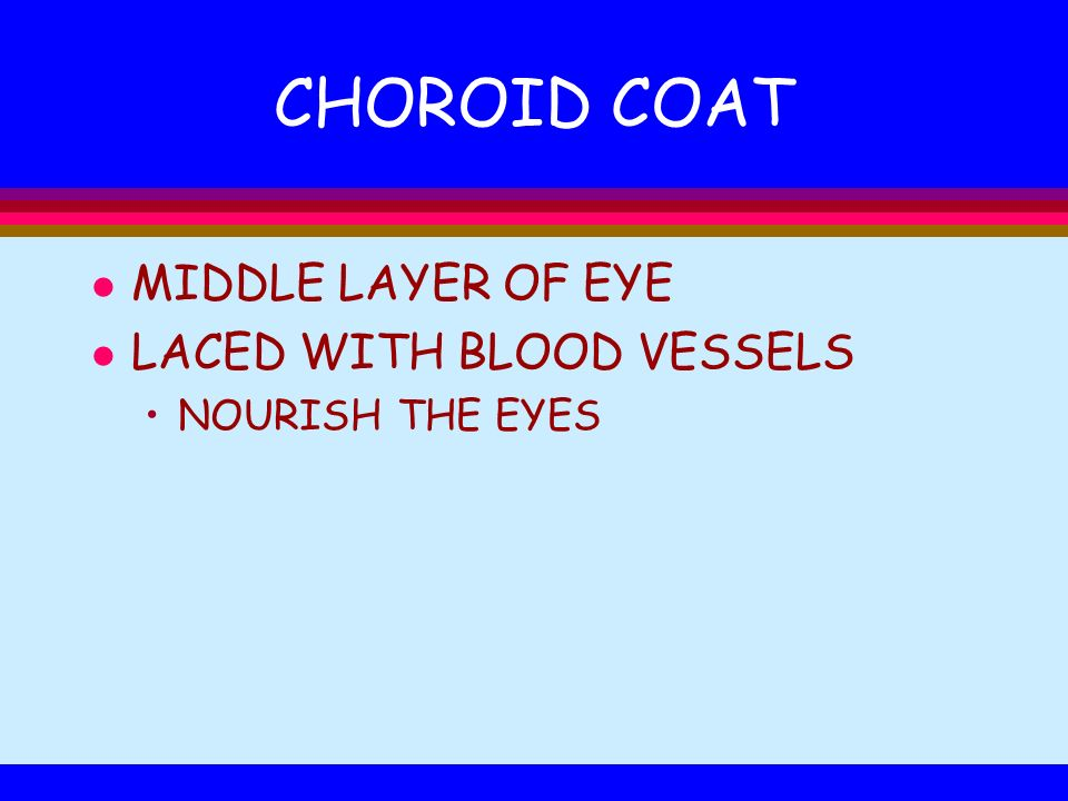CHOROID COAT MIDDLE LAYER OF EYE LACED WITH BLOOD VESSELS