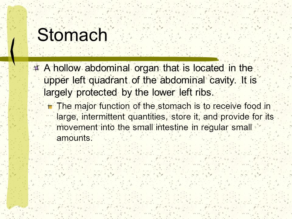 Stomach A hollow abdominal organ that is located in the upper left quadrant of the abdominal cavity. It is largely protected by the lower left ribs.