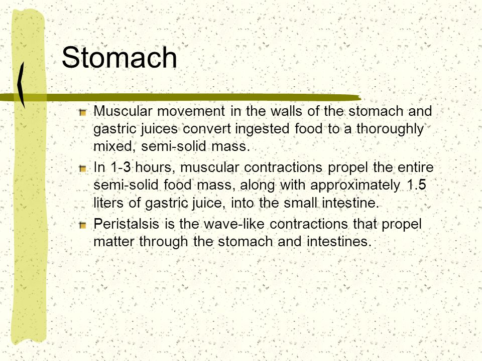 Stomach Muscular movement in the walls of the stomach and gastric juices convert ingested food to a thoroughly mixed, semi-solid mass.