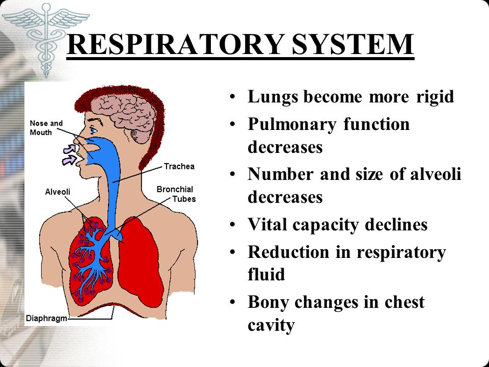 RESPIRATORY SYSTEM Lungs become more rigid