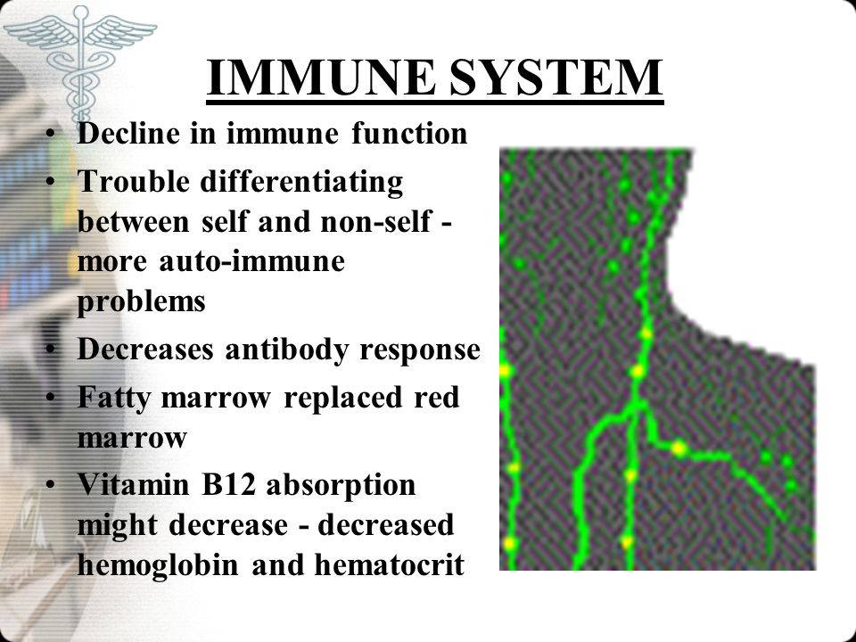 IMMUNE SYSTEM Decline in immune function
