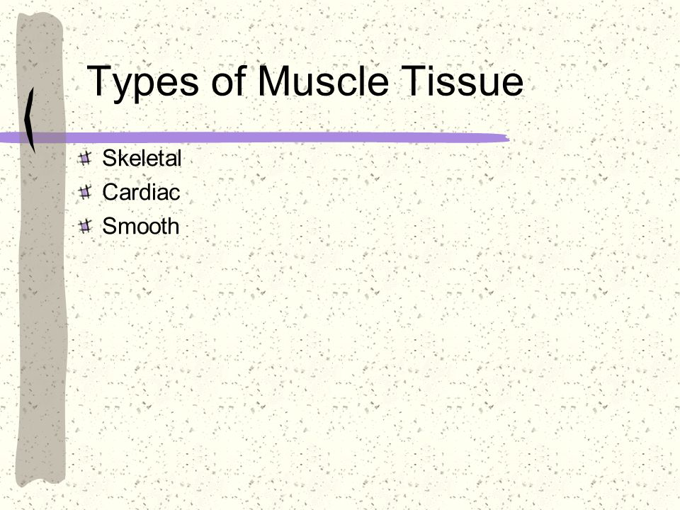 Types of Muscle Tissue Skeletal Cardiac Smooth