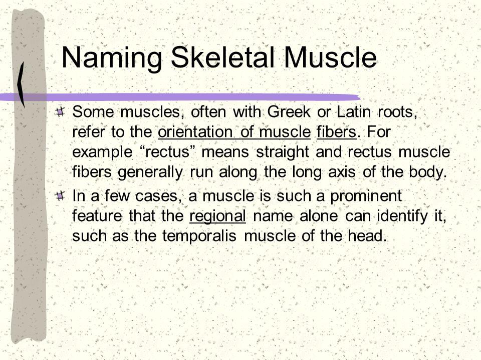 Naming Skeletal Muscle