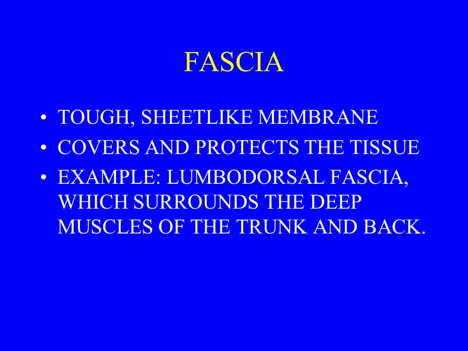 FASCIA TOUGH, SHEETLIKE MEMBRANE COVERS AND PROTECTS THE TISSUE