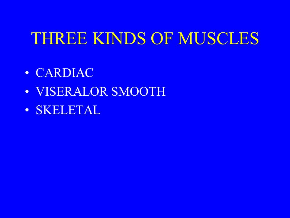 THREE KINDS OF MUSCLES CARDIAC VISERALOR SMOOTH SKELETAL