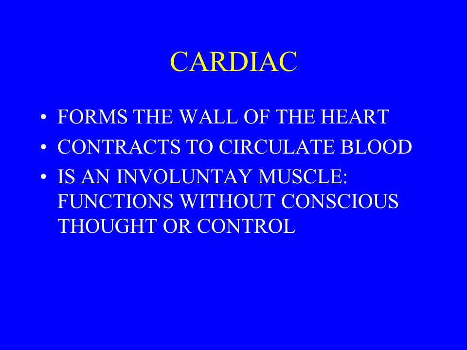 CARDIAC FORMS THE WALL OF THE HEART CONTRACTS TO CIRCULATE BLOOD