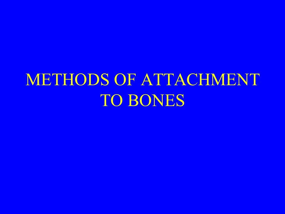 METHODS OF ATTACHMENT TO BONES