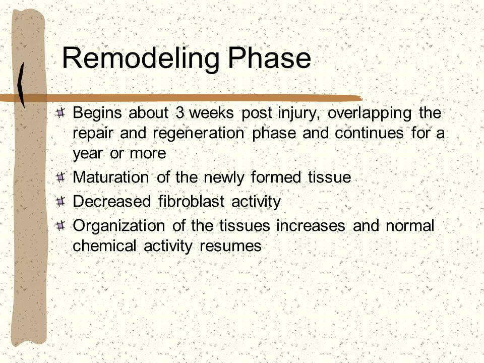 Remodeling Phase Begins about 3 weeks post injury, overlapping the repair and regeneration phase and continues for a year or more.