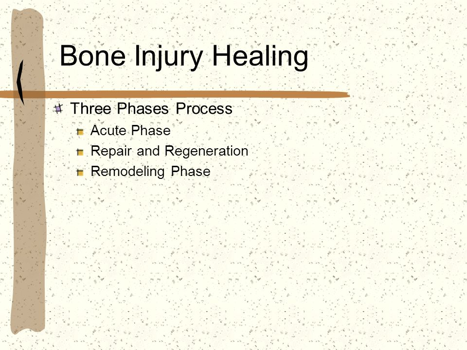Bone Injury Healing Three Phases Process Acute Phase